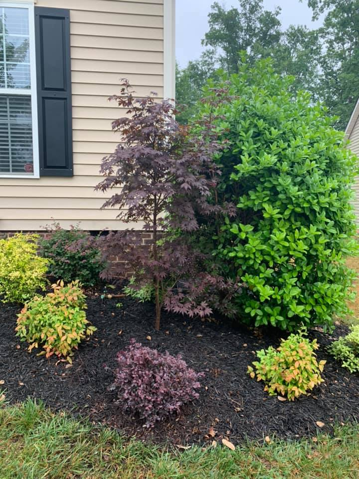 Plantings Warranty