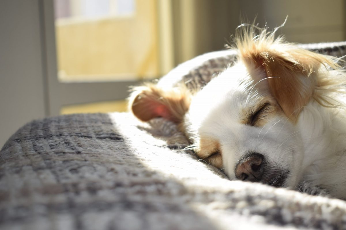 How to Get Rid of Fleas Safely and Naturally