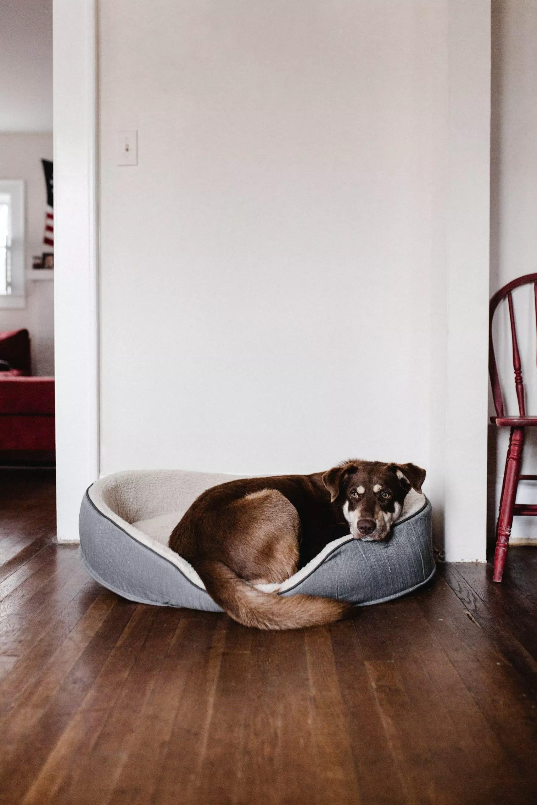 Weimaraner Training-5 Rules For Successful Dog Training