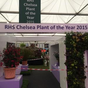 The 2015 Plant of the Year finalists stand