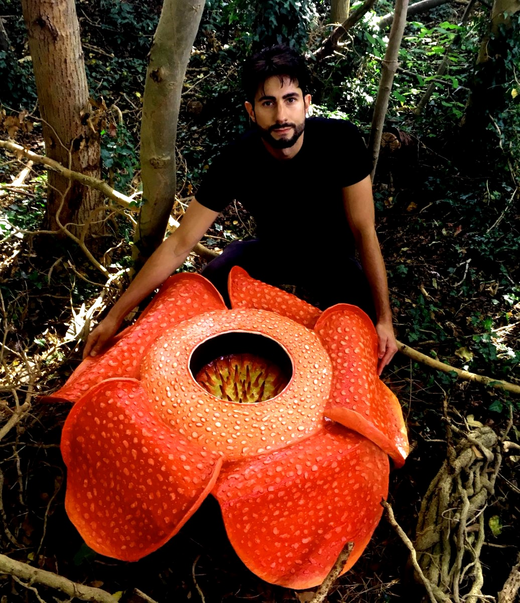 Rafflesia - the largest flower on earth