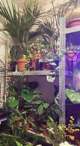 Plant lover: 10 reasons why I love plants so much - Jermain brings his plants inside for winter