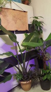 Plant lover: 10 reasons why I love plants so much - more indoor plants