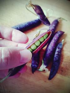 5 benefits of allotments: Peas from the allotment