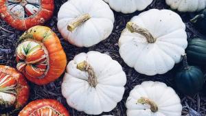 5 benefits of allotments: Pumpkins