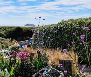 Coastal Garden: Windbreak