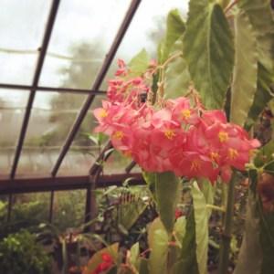Plants Tour