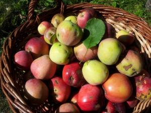 Gardening jobs for December: Check stored fruit