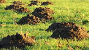 Gardening jobs February: Repair mole damage
