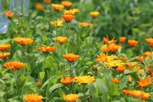 Gardening jobs for July: Collect seeds