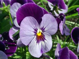 Gardening jobs for July: Sow winter bedding
