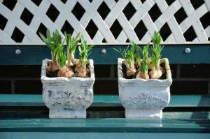 Gardening jobs for October: Plant lily bulbs