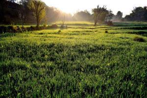 Gardening jobs for September: Feed