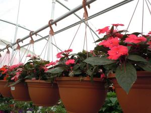 Gardening jobs for September: Feed and deadhead hanging baskets