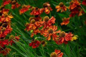 Gardening jobs for September: Divide herbaceous perennials