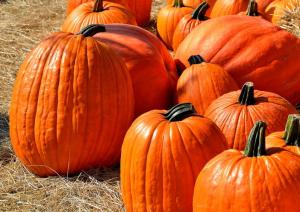 Gardening jobs for September: Ripen pumpkins