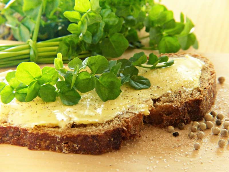 Edible Weeds: Hairy Bittercress