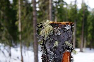 Plant Evolution: Lichen