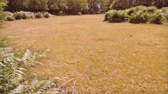 Is my lawn dead?