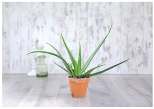 Houseplants: Which indoor plants are best suited to each room in your house?