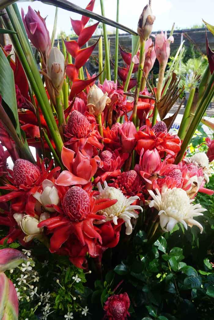 Bangkok plant market: Etlingera
