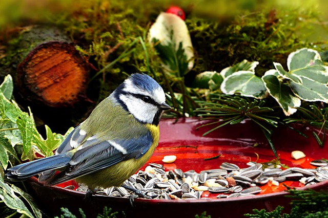 Beat the Blue Monday blues: Bird eating seed from a plate