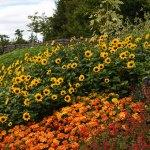 QVC Gardening April highlights: Thompson & Morgan SunBelievable