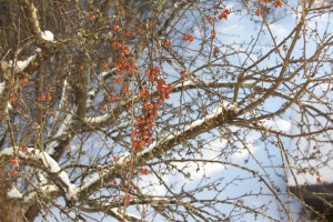 Seasonal Gardening: Winter wash trees