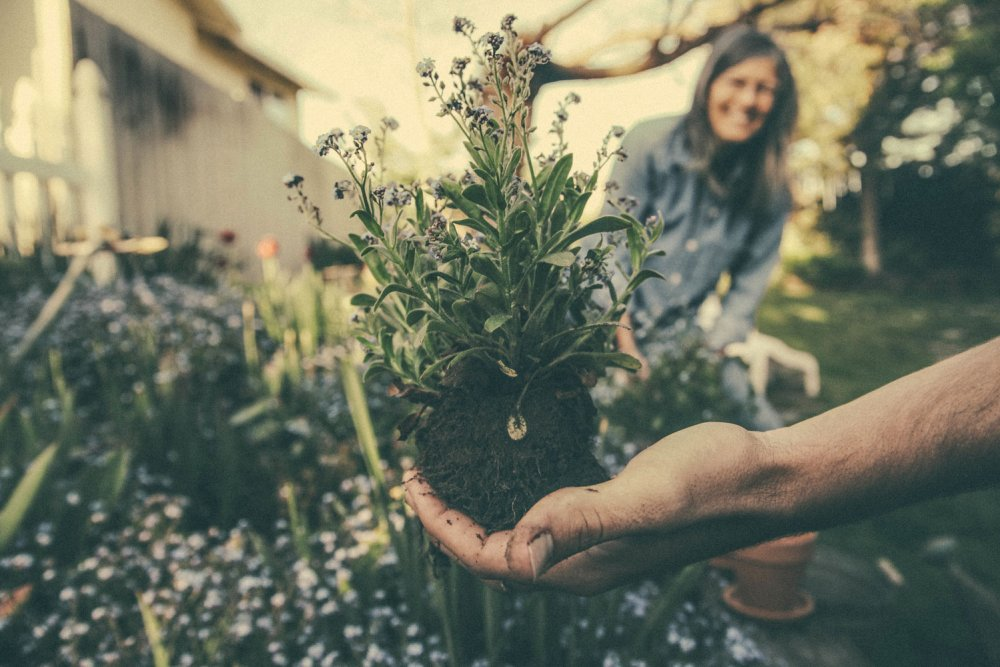 Gardening for the mind and body