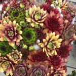 Flower Trials 2019