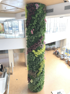 Plants in retail and shopping areas