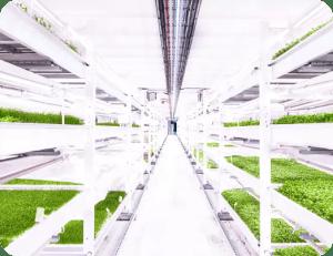 Underground Farming