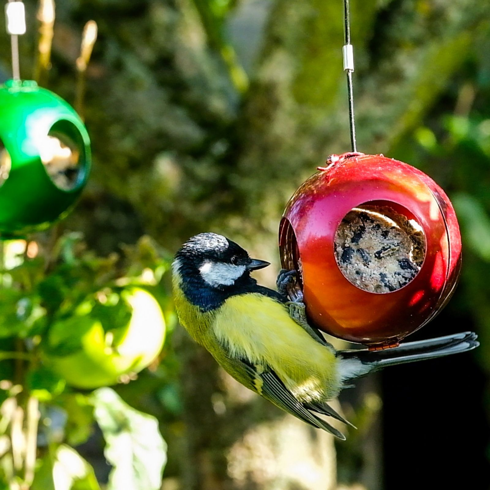 Bird baubles with fatballs