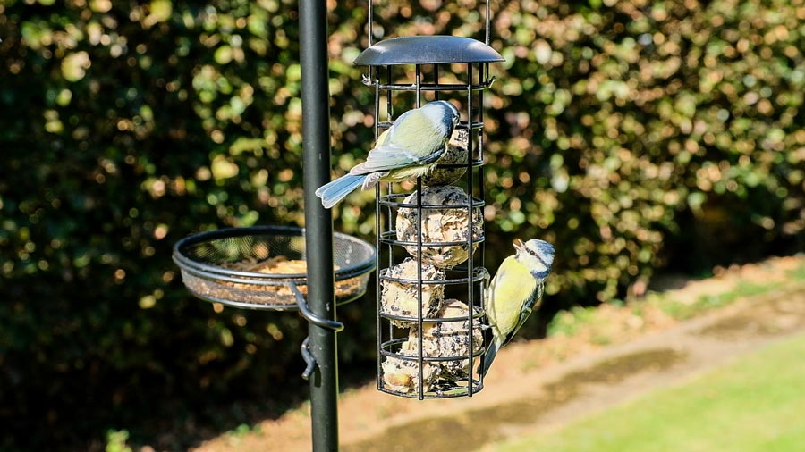 Bird Feeding Station from QVC