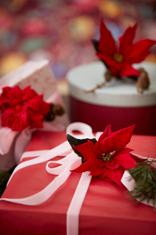 Red Poinsettia giftwrap