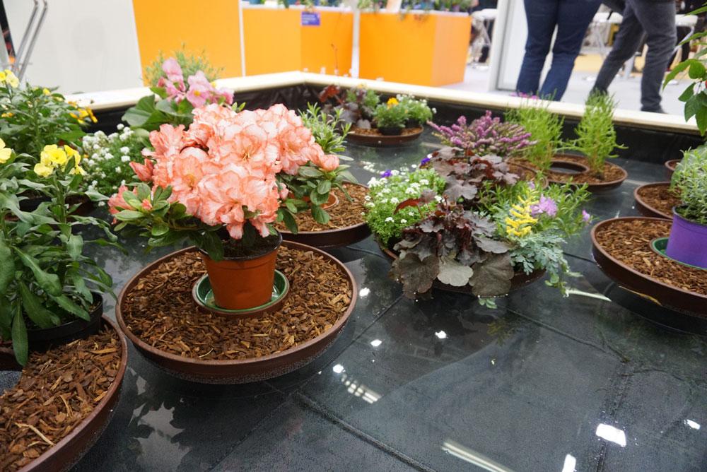 Flower assortment