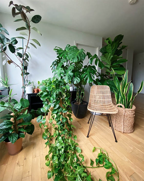 Living room greenery