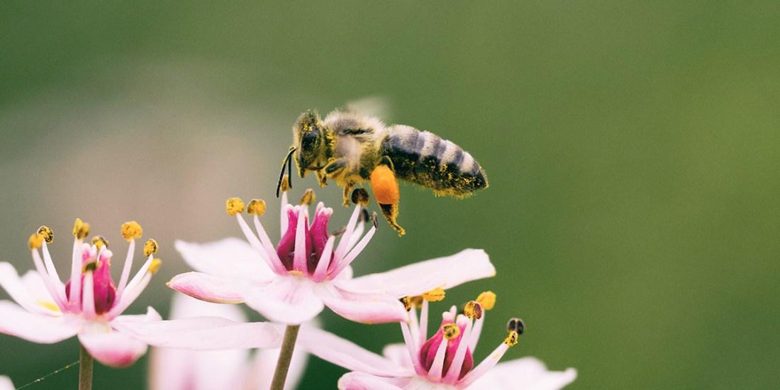 Bee on wildflower