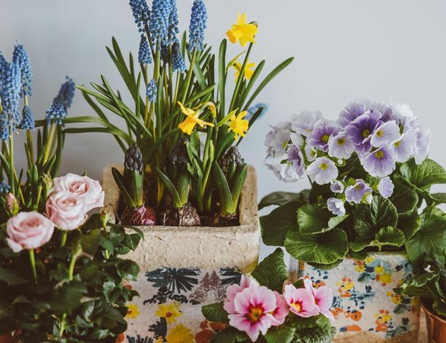 Houseplants that repel bugs - feature image