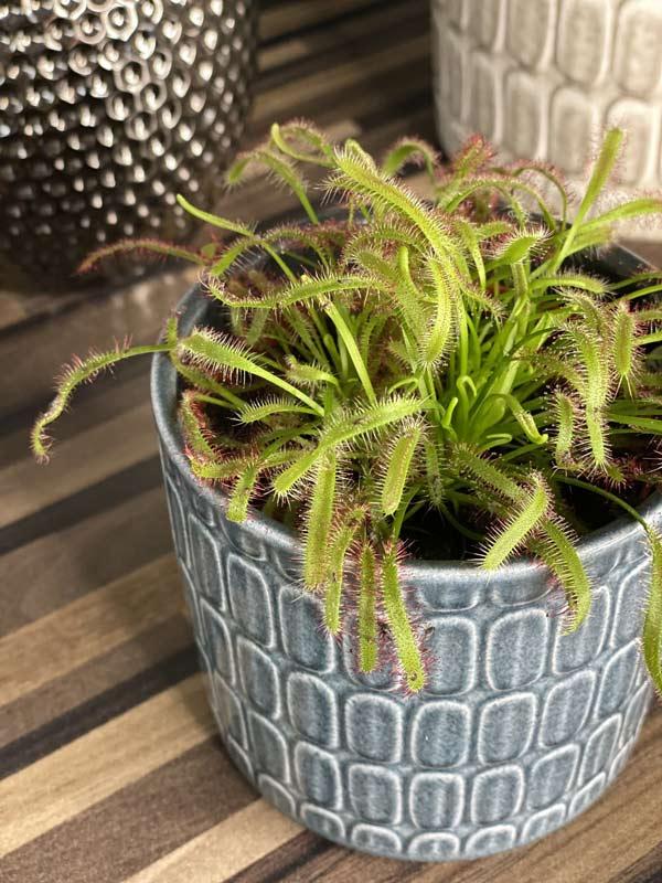 Unusual indoor plants