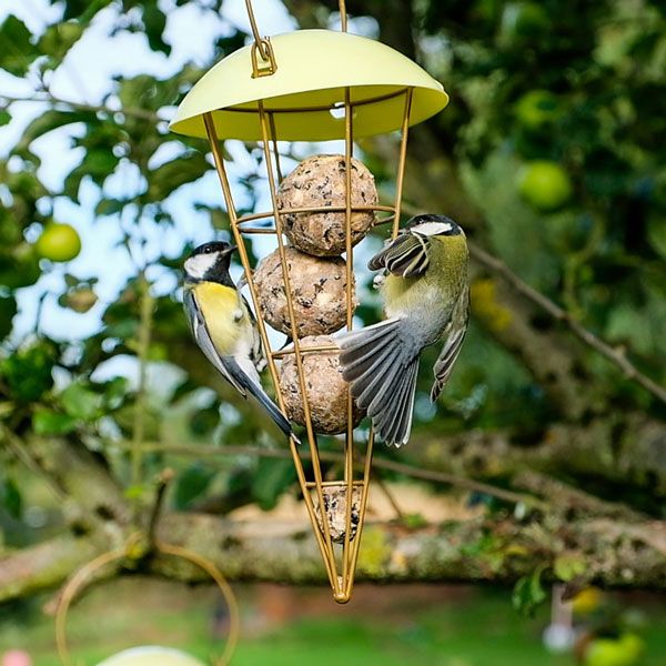 Fat balls in a bird feeder with two blue tits