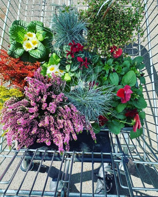 Plants in trolly