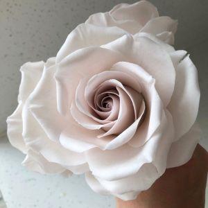 Rose 'Earl Grey'