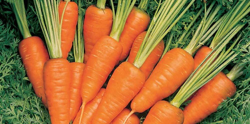 Carrot Short n Sweet