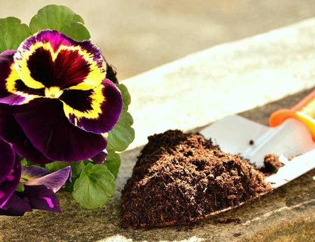 The problem with cheap compost