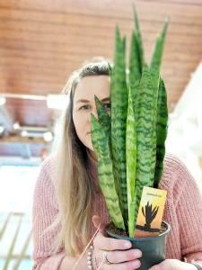 Donna - Pretty Cactus