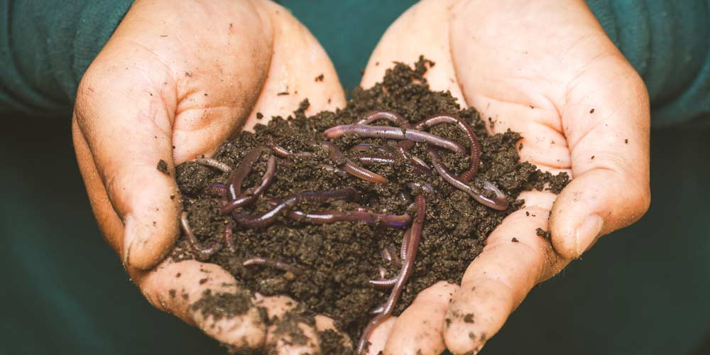 Why you should love earthworms