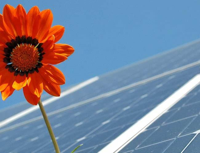 Solar panels with flower