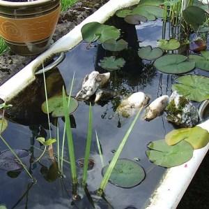 Patio Pond