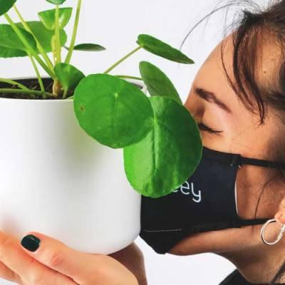 Plantdemic